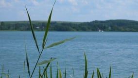看法通过在一个大湖的芦苇蓝天 自然的横向 股票录像