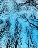 看法通过在天蓝色的树 库存照片