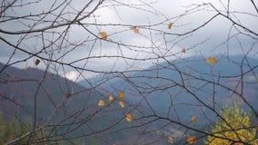 看法通过在美丽的秋天森林的分支山的 股票视频
