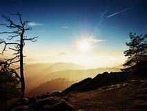看法通过对有薄雾的谷的树在春天破晓内 有雾和薄雾 免版税图库摄影