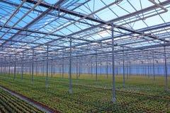 看法通过有年幼植物行的温室  免版税库存照片