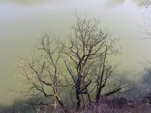 看法通过树在水中 库存图片