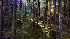 看法通过森林 库存图片