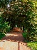 看法通过植物和灌木挖洞与橙色道路 库存照片