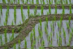 看法露台的稻田在Mae果酱村庄, Chaingmai 库存图片