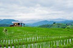 看法露台的稻田在Mae果酱村庄, Chaingmai 免版税库存图片