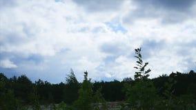 看法Landskap山树天空雾 影视素材