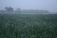 看法rozen在草甸的草 图库摄影