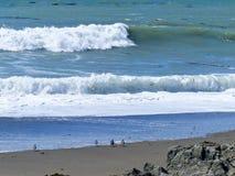 看海浪的四只鸟 免版税库存照片