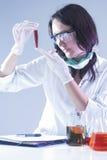 看烧瓶的女性试验室工怍人员充满液体化学制品在实验期间 库存照片