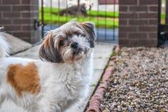 看照相机的可爱的狗 库存照片