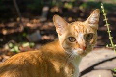 看照相机的可爱的红色猫室外 逗人喜爱的宠物概念 猫画象特写镜头 免版税库存照片