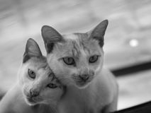 看照相机的夫妇CAT 免版税库存图片