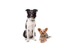 看照相机的小和大狗 免版税库存图片