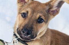 看照相机的狗 免版税库存照片