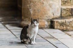 看照相机的猫 免版税库存图片