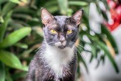 看照相机的猫画象 免版税库存照片