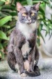 看照相机的猫画象 免版税图库摄影