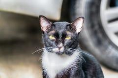 看照相机的猫画象 库存图片