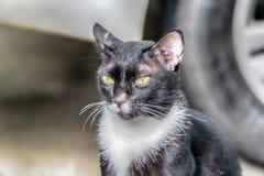 看照相机的猫画象 库存照片
