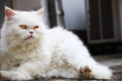 看照相机的猫 免版税库存照片