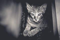 看照相机的猫 库存照片