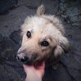 看照相机的街道狗 库存图片