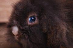 看照相机的逗人喜爱的狮子头兔子兔宝宝 库存图片