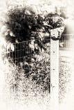 看照相机的龟甲母猫栖息在tw之间 免版税库存照片