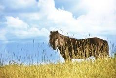 看照相机的黑小马马 免版税图库摄影