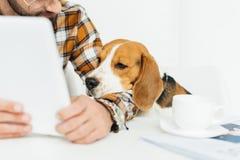 看片剂的逗人喜爱的小猎犬的播种的图象 库存照片