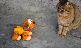 看猫的狗 免版税库存图片