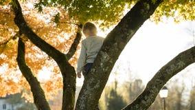 看的树枝的小男孩下来 库存图片