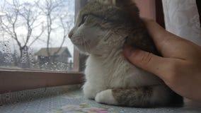 看的猫坐窗口和 库存照片