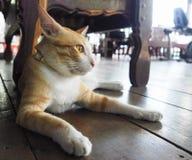 看的猫,猫休息在天时间的街道的,懒惰猫,滑稽的猫 免版税图库摄影