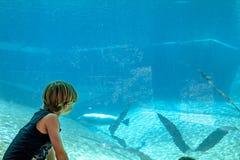 看的男孩的剪影aeal在水族馆 库存照片