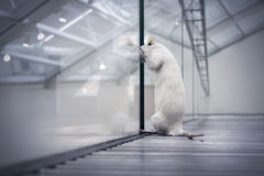 看的鼠作梦自由 库存照片