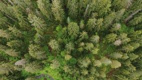 看直接在山小河下上面树上面 股票视频