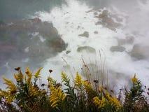 看看在尼亚加拉瀑布- NY的黄色花-美国 免版税图库摄影