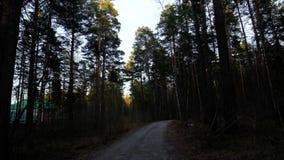 看看天空在秋天森林里 股票录像
