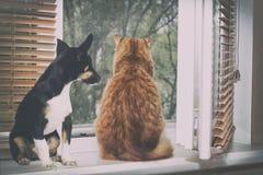 看窗口的猫和小狗 图库摄影
