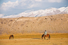 看管在一只马和驹在天山山  库存照片