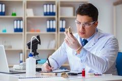 看绝种动物骨头的古生物学家 免版税图库摄影