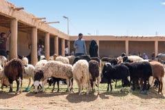 看绵羊的摩洛哥人一个绵羊市场在摩洛哥 免版税库存照片