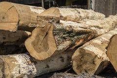 看见了日志,树,锯木厂,木材 免版税库存图片