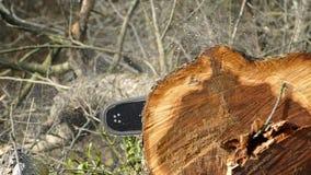 看见了树锯 木芯片从锯落 股票视频