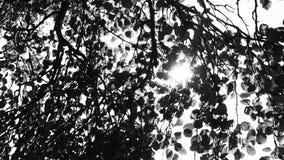 看见太阳在树下 免版税库存照片