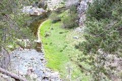 从看见的河在树之间 免版税库存照片