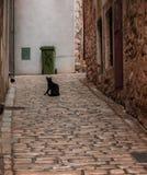 看观点的黑街道的猫坐直和 免版税库存图片