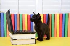 看计算机的好奇黑小猫 免版税库存图片